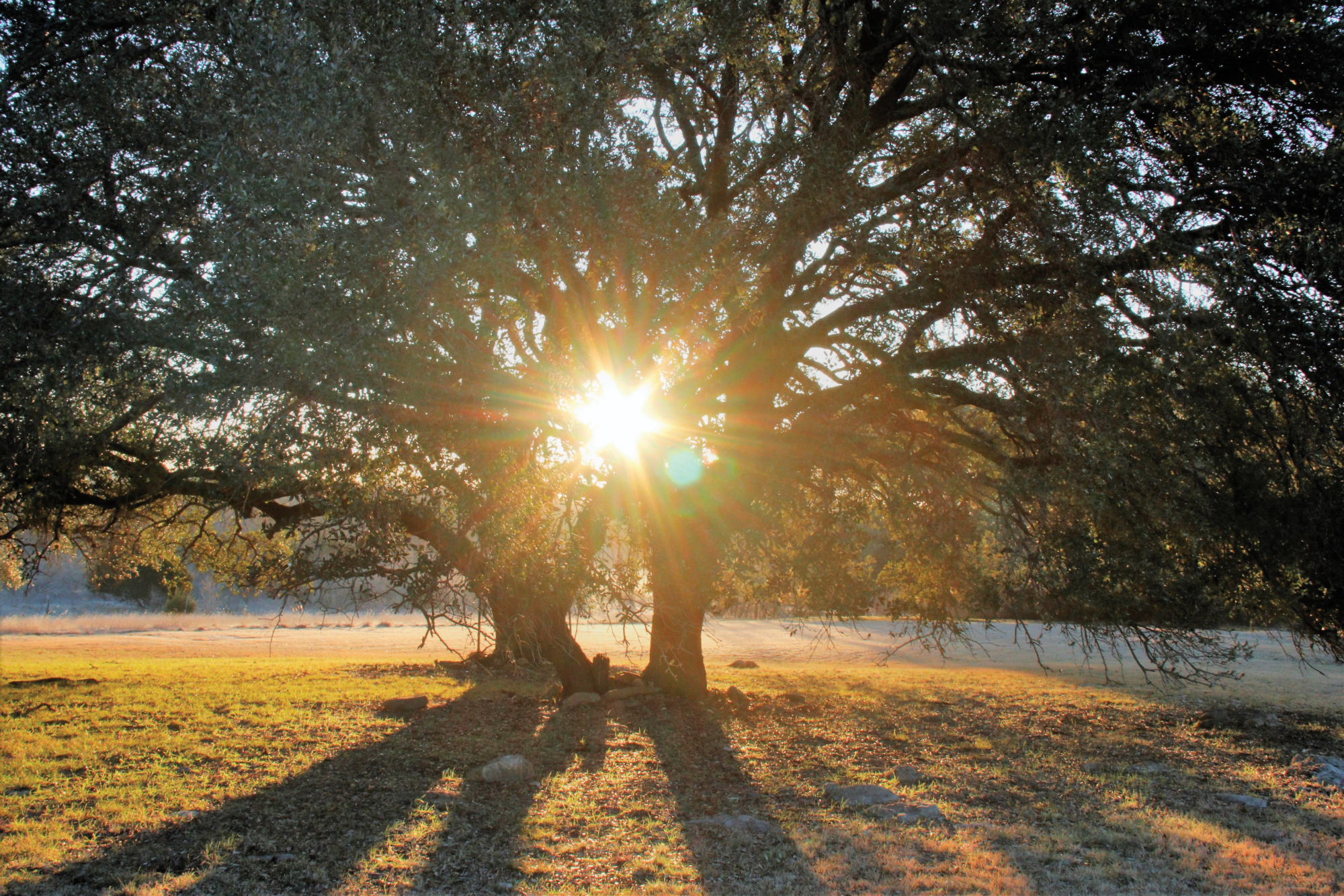 Pursuing their passion in the Texas Hill Country